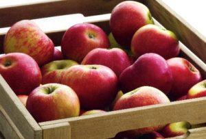 Ausschreibung zur Apfelfahrt 2017